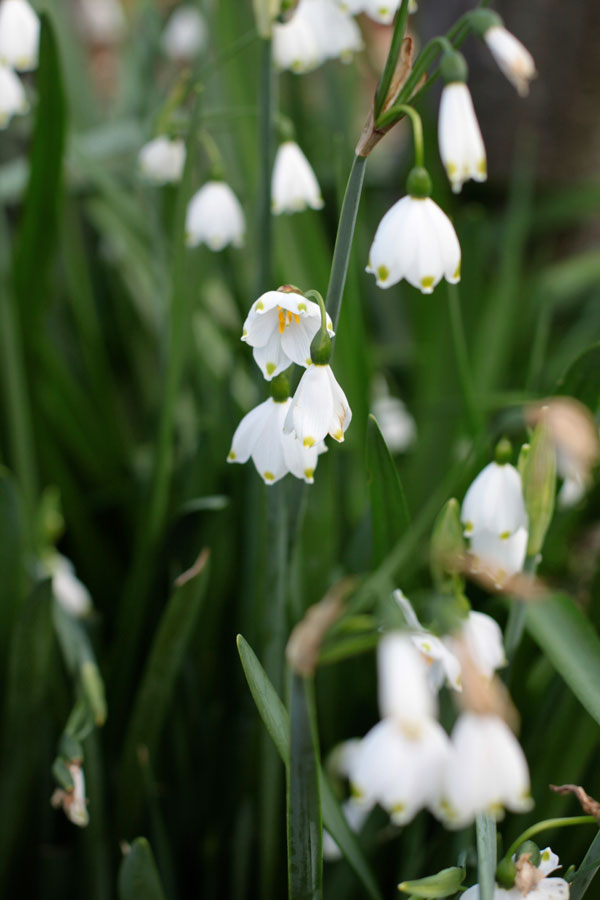 Spring Snowdrops by Bit Square Blog