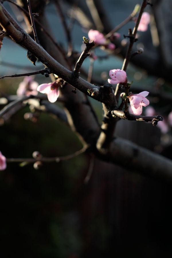 Spring-Blossom---Bit-Square-Blog