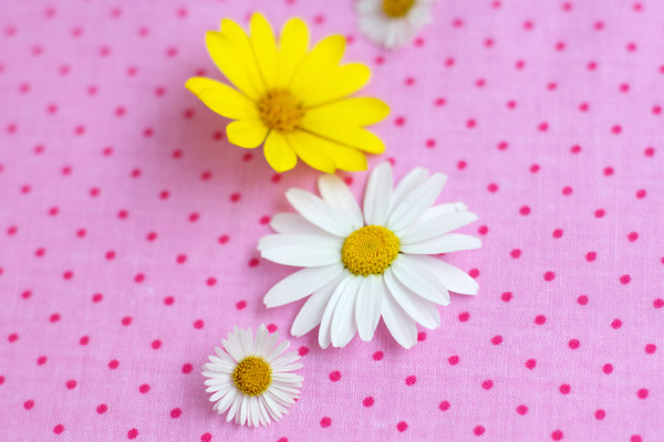 daisies-and-polka-dots-pink
