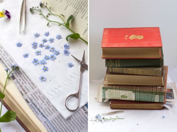 DIY Pressed Flower Confetti - How To Press Flowers