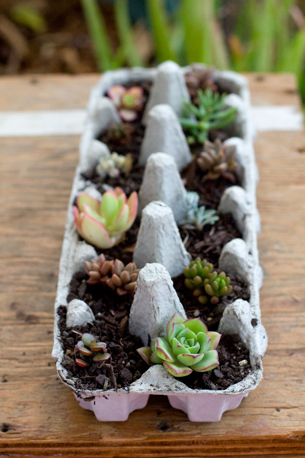 Succulent gift ideas - Egg carton succulents