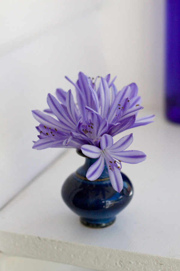 Simple Tiny Flower Arrangements - 3 Ways with Agapanthus DIY
