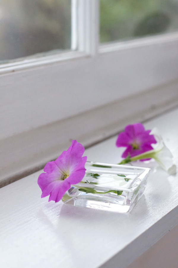 Window Sill Flower Arrangement with Petunias