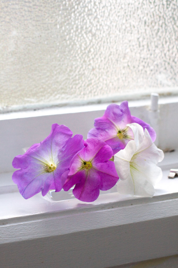 Mini Window Sill Flower Arrangement with Petunias